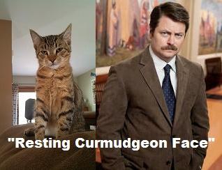 YAF_curmudgeon